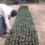 Dans le cadre du PAIES, la SIDI soutient la FCMN Niya, une fédération de coopératives maraîchères nigériennes. Actuellement celle-ci rassemble plus de 26 000 producteurs regroupés en 143 coopératives. Les produits de la fédération s'écoulent sur un marché local, qui tend à se régionaliser, répondant à une vraie demande. C'est un acteur engagé, souhaitant développer ses activités en faveur de la protection de l'environnement, comme la production de compost afin de remplacer les engrais chimiques. La SIDI a ici souhaité accompagner une démarche de progrès, présentant un véritable potentiel de changement écologique et social.